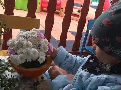 kwiaty w dyni 02