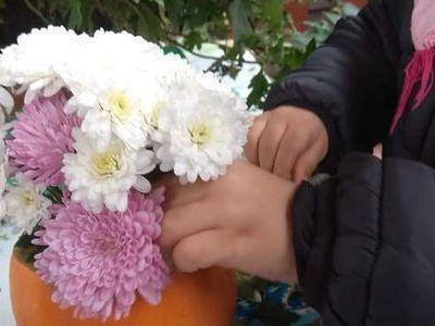kwiaty w dyni 03